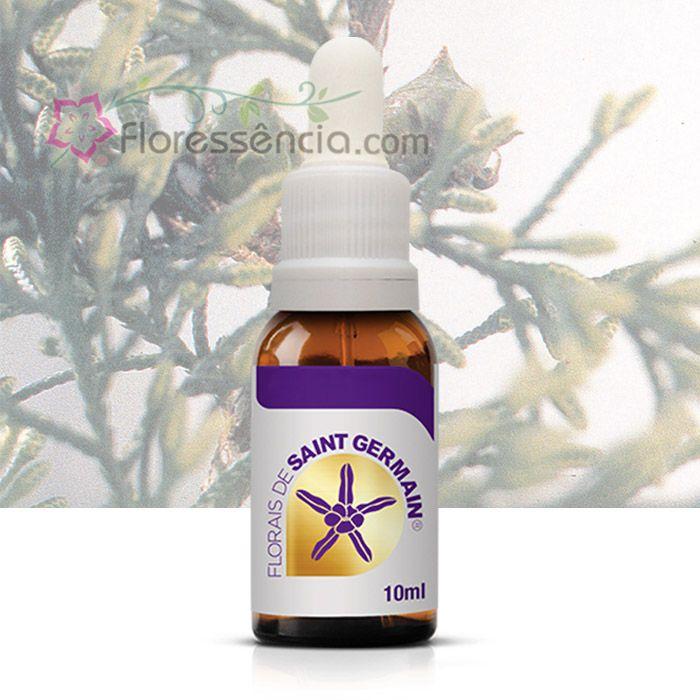 Monterey - 10 ml  - Floressência