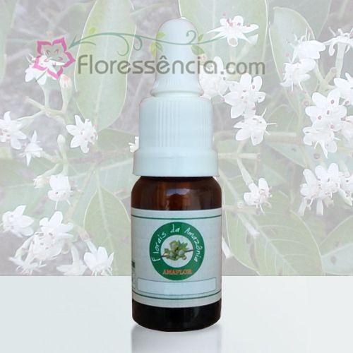 Mulateiro - 10 ml  - Floressência