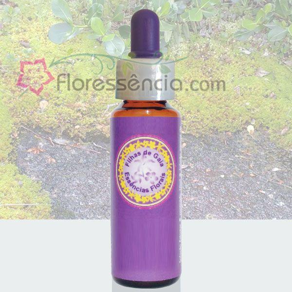 Musgo - 10 ml  - Floressência