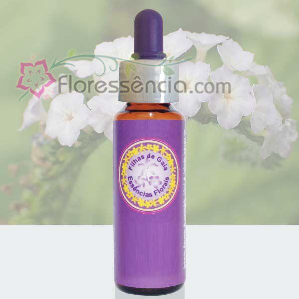 Naja - 10 ml  - Floressência