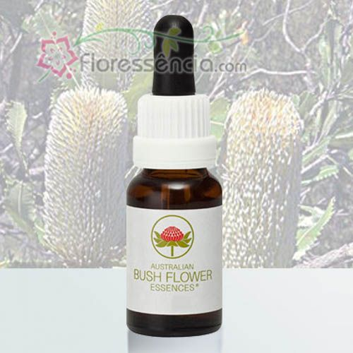 Old Man Banksia - 15 ml  - Floressência