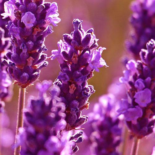 Óleo Essencial de Lavandim - 10 ml  - Floressência