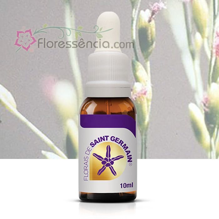 Panicum - 10 ml  - Floressência