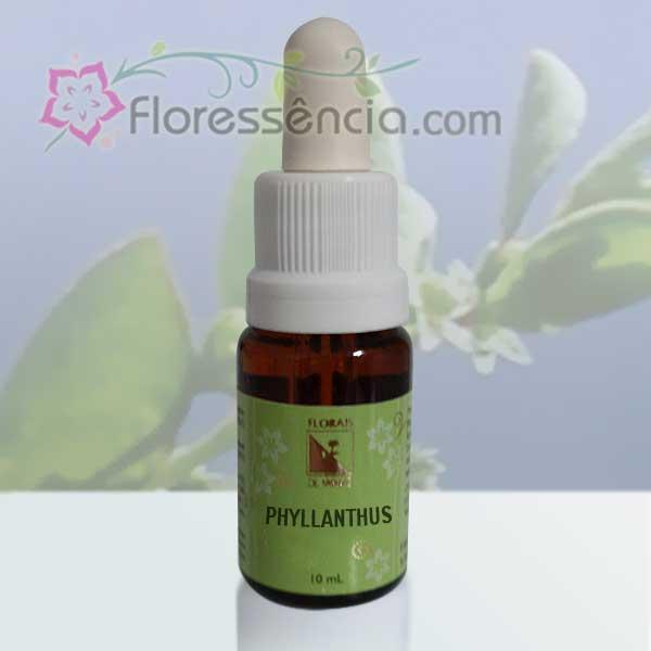 Phyllanthus - 10 ml  - Floressência
