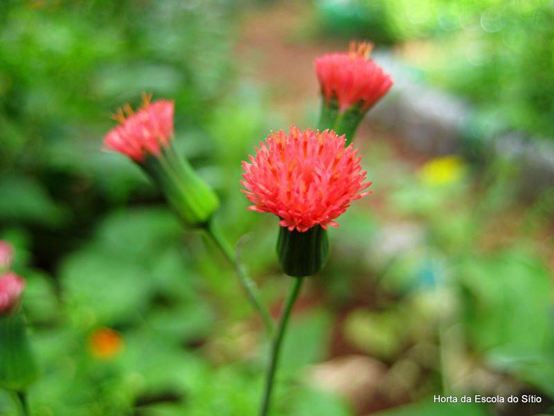 Pincel de Estudante - 10 ml  - Floressência