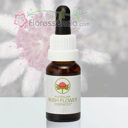 Pink Flannel Flower - 15 ml  - Floressência