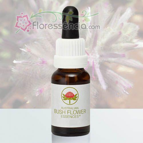Pink Mulla Mulla - 15 ml  - Floressência
