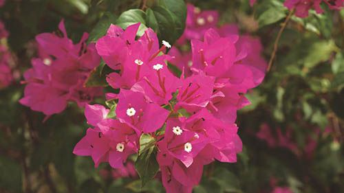 Primavera - 10 ml  - Floressência