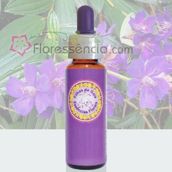 Quaresmeira Roxa - 10 ml  - Floressência
