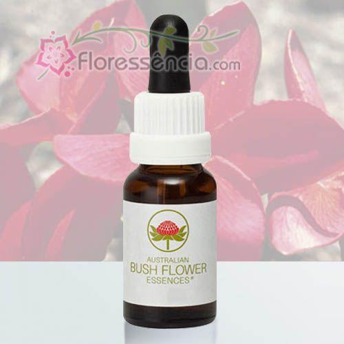 Red Suva Frangipani - 15 ml  - Floressência