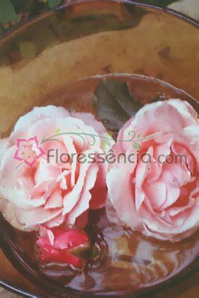 Rosa Rosa - 10 ml  - Floressência
