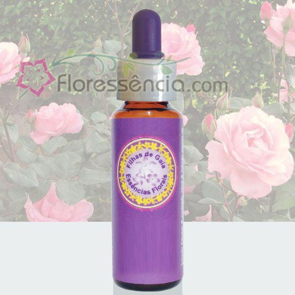 Rosa Rosa - Filhas de Gaia - 10 ml  - Floressência