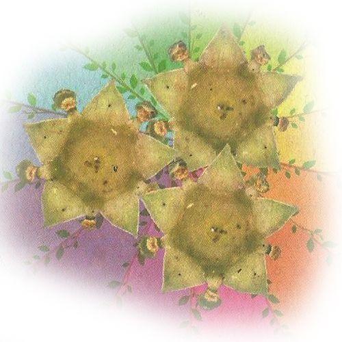 Saracura - 10 ml  - Floressência