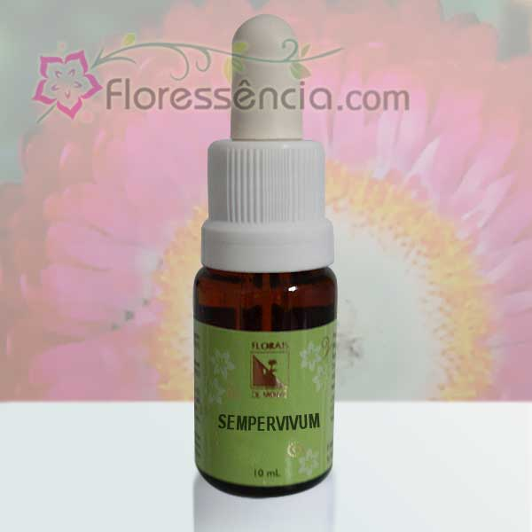Sempervivum - 10 ml  - Floressência
