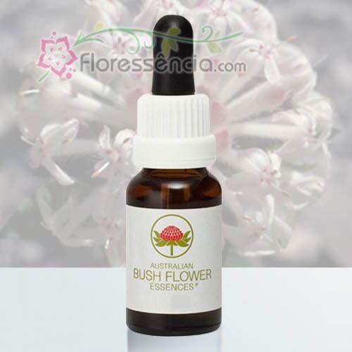 Slender Rice Flower - 15 ml  - Floressência