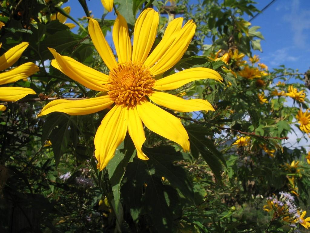 Sol da Montanha - 10 ml  - Floressência