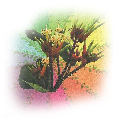 Soloiã - 10 ml  - Floressência