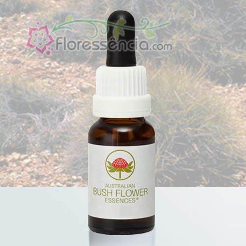 Spinifex - 15 ml  - Floressência