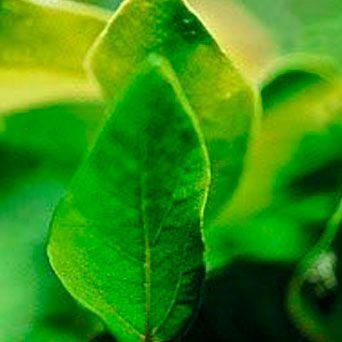 Tassi - 15 ml  - Floressência