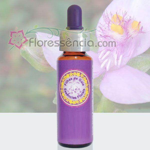 Trapoeiraba Rosa - 10 ml  - Floressência