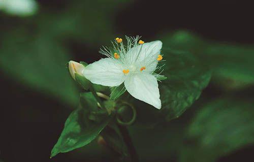 Trindade - 10 ml  - Floressência