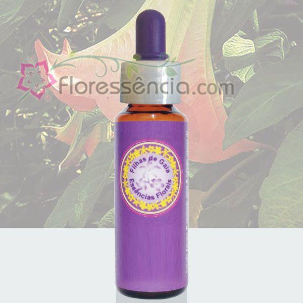 Trombeta de Anjo Rosa - 10 ml  - Floressência