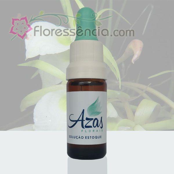Viajante - 10 ml  - Floressência