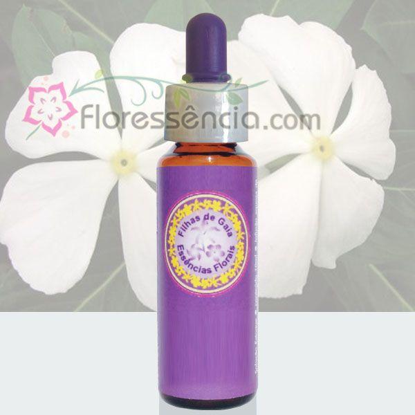 Vinca Branca - 10 ml  - Floressência