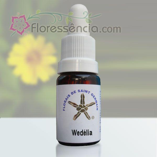 Wedélia - 10 ml  - Floressência