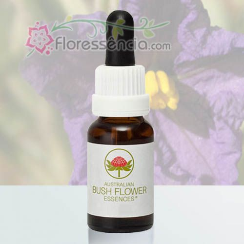 Wild Potato Bush - 15 ml  - Floressência