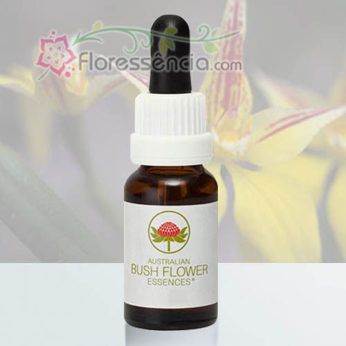 Yellow Cowslip Orchid - 15 ml  - Floressência