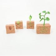 Montessori Ciclos de Vida