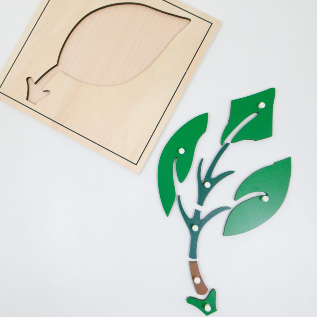Quebra Cabeça Folha Botânica Montessori