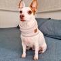 Cachecol Pet Tubo Hello Pets