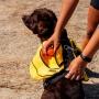 Mochila para Trail com cachorro - Preta