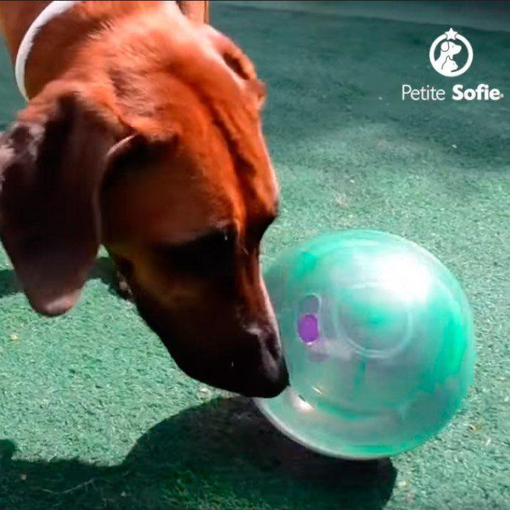 Brinquedo Interativo Petball PetGames