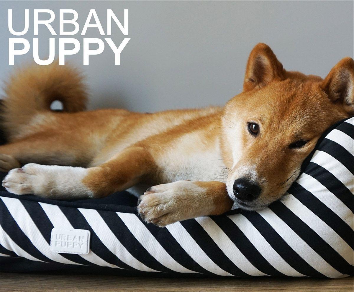 Cama Oval Lonita Urban Puppy Marinho - M