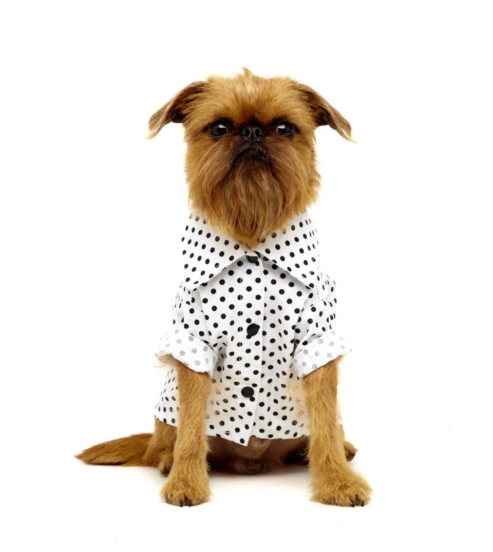 Camisa Pet Polka Dot Branca My Boo