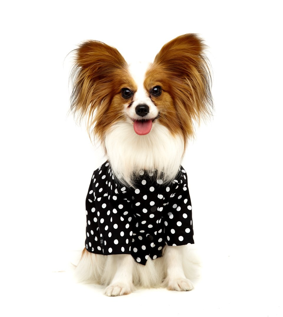Camisa Pet Polka Dot Preta My Boo