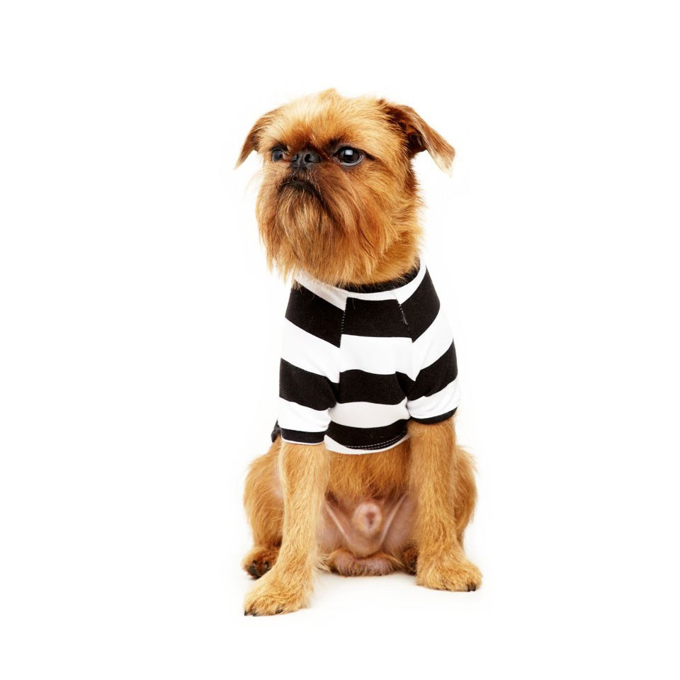 Camiseta Pet Haglan Street Stripes My Boo