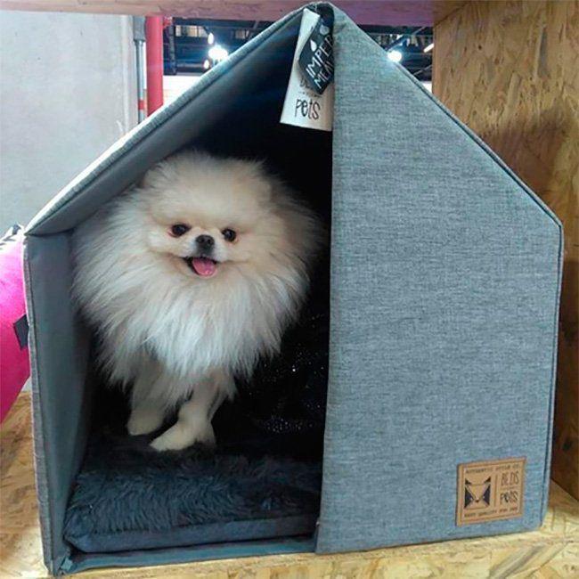 Casinha para Cachorro The House Grey Beds for Pets