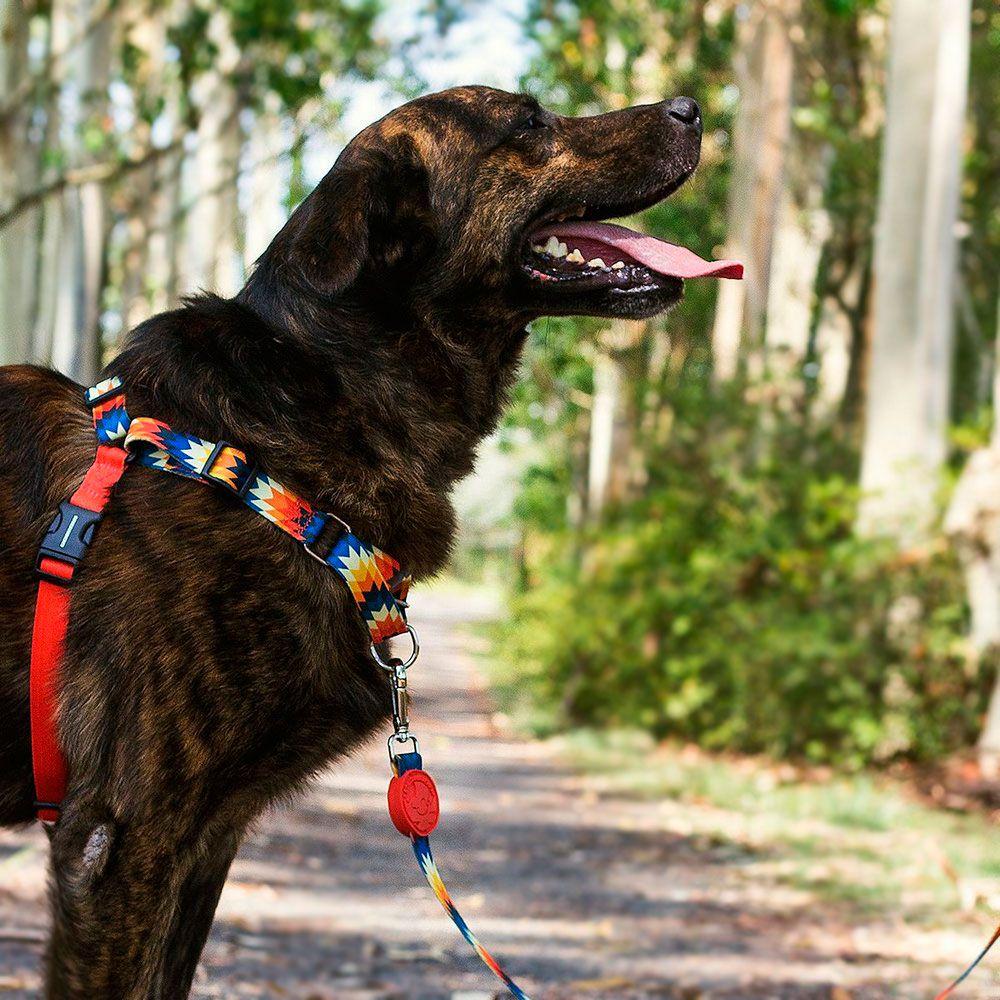 Coleira Peitoral Easy Walk para cachorro Inti