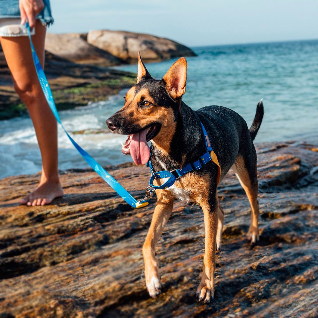 Coleira Peitoral Easy Walk para cachorro Olivia Indigo