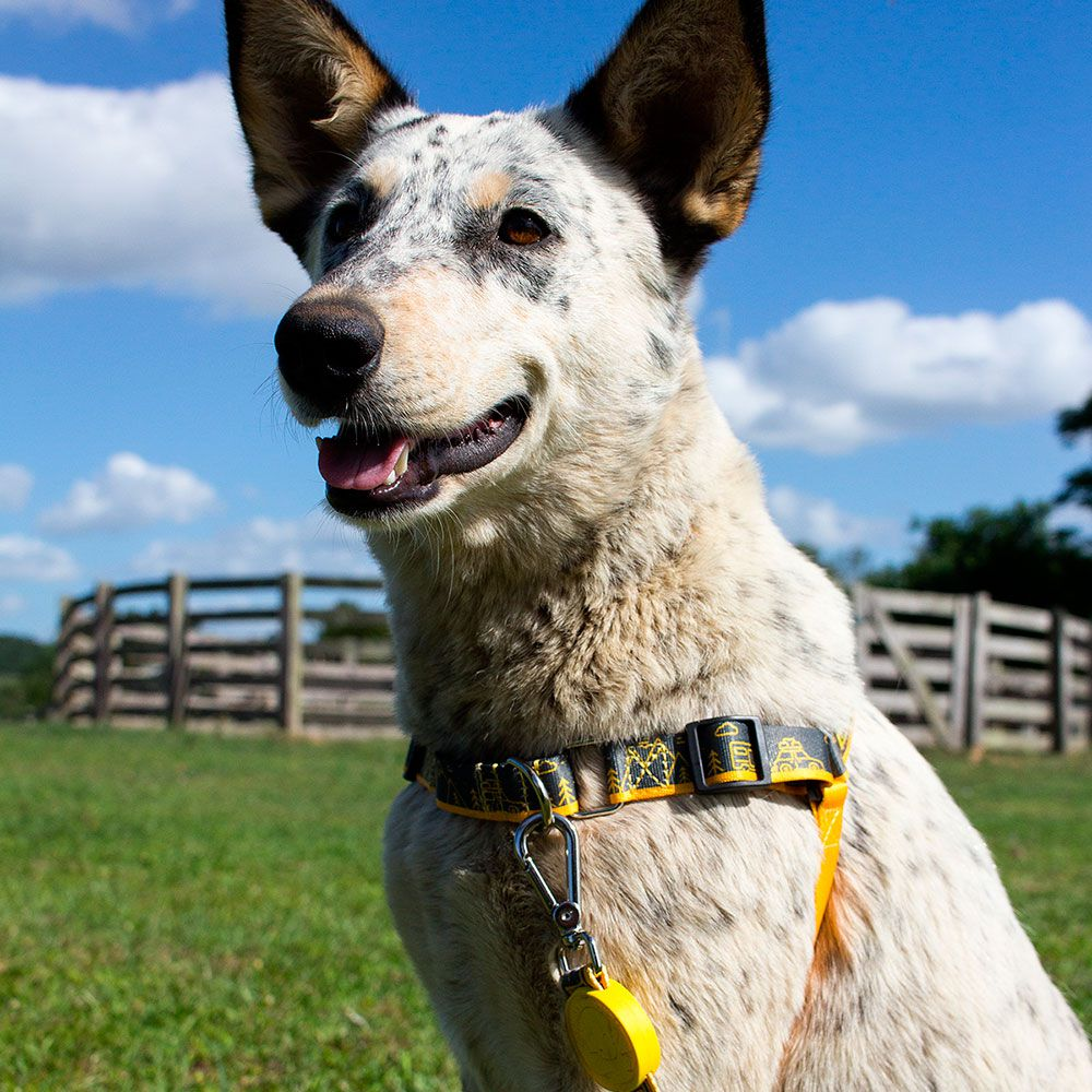 Coleira Peitoral Easy Walk para cachorro Outdoor