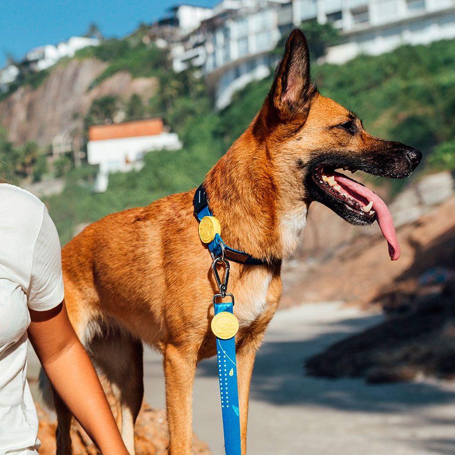 Coleira para cães Olivia Indigo