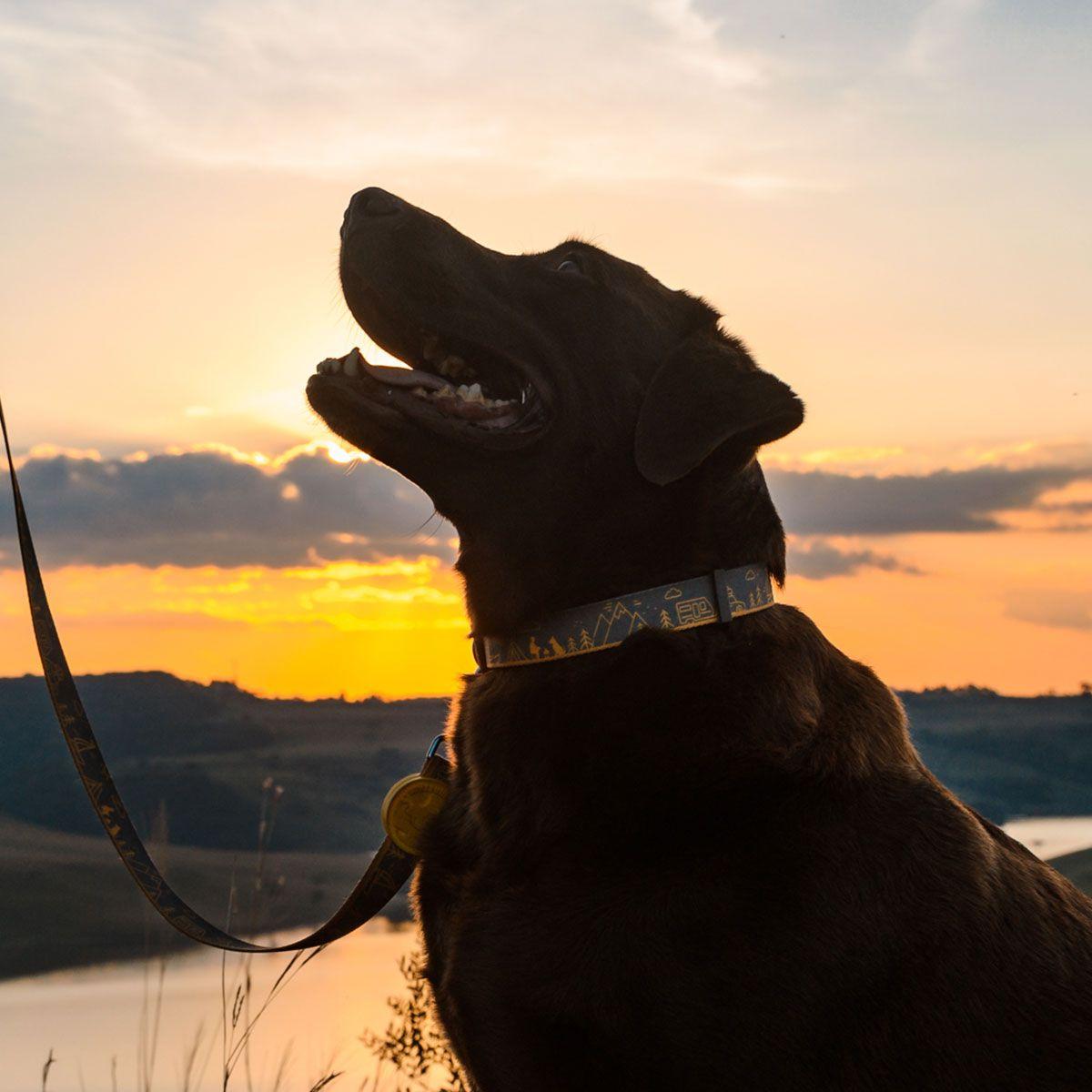 Coleira para cães Outdoor