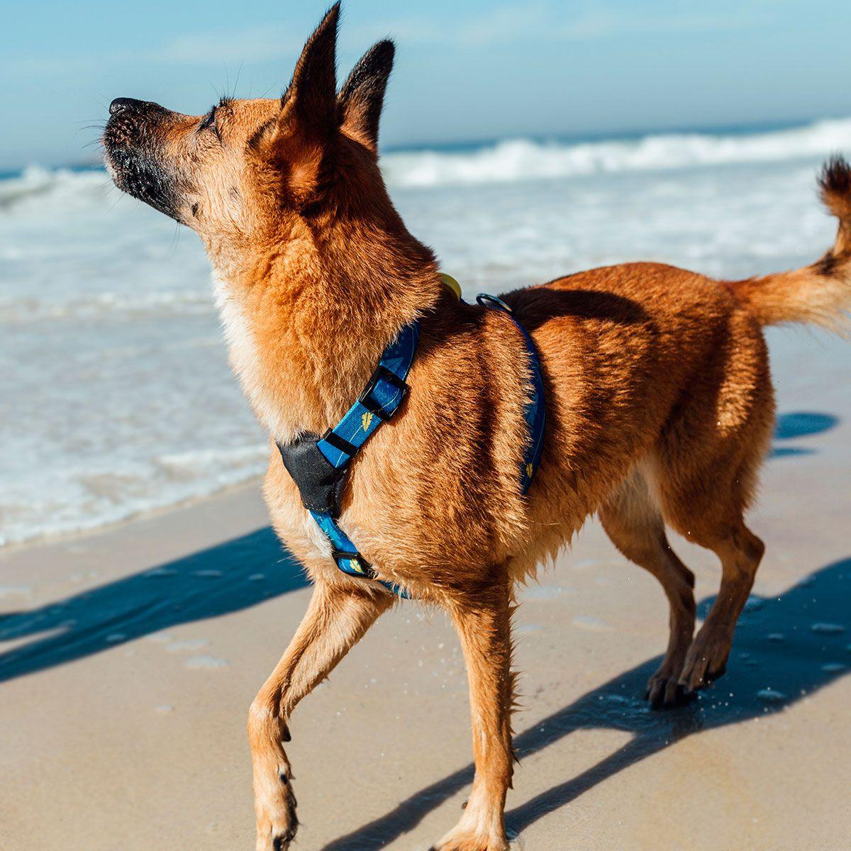Coleira Peitoral para cachorro Olivia Indigo