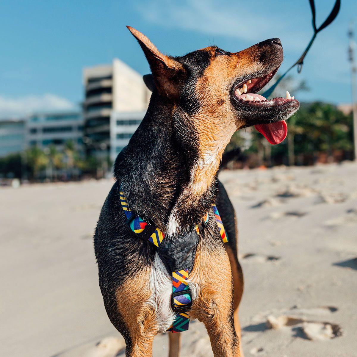 Coleira Peitoral para cachorro T-Mutts