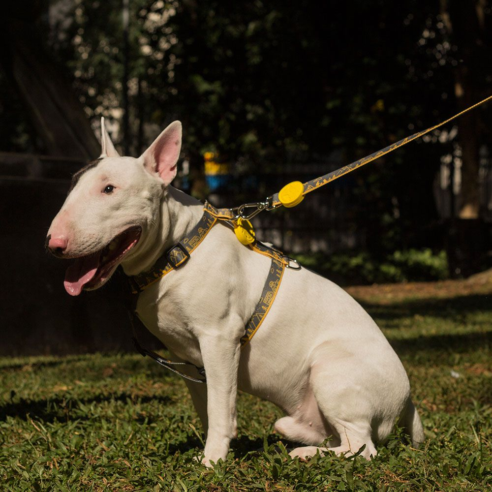 Guia Baby para cães pequenos Outdoor