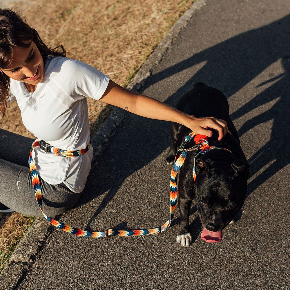 Guia Running Inti para correr com cães